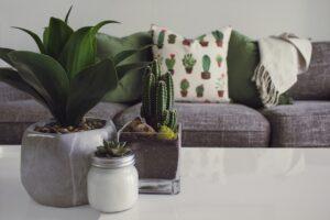 Home-Decor-Plant