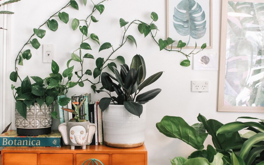 Lush Indoor Greenery: The 5 Best Low Light Indoor Plants